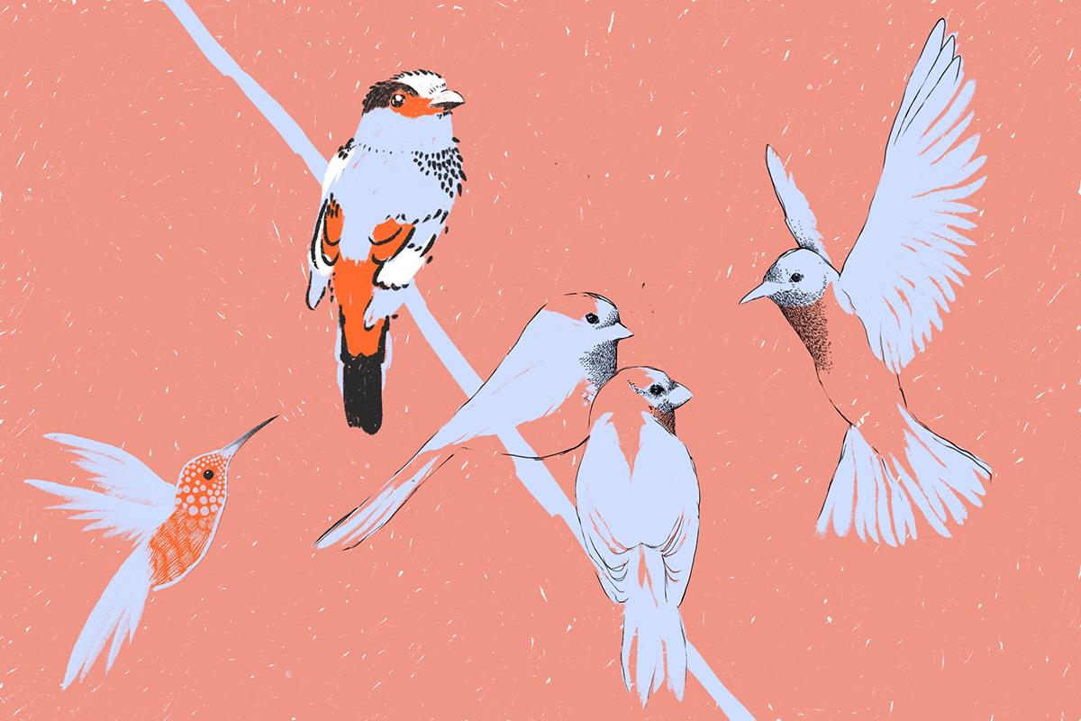 Crónica del silencio + cinco prácticas para escuchar el lenguaje de los pájaros
